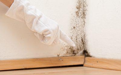 Schimmel entfernen Tipps /bei Desinfektion