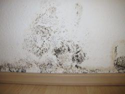 Schimmel auf der Wand entfernen
