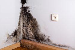 Schimmel in der Ecke eines Raumes an der Wand