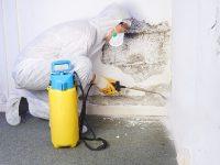 Eine Schutzausrüstung zur Schimmelsanierung ist ein wichtiger Schutz zur Ihrer Gesunderhaltung.